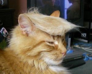 trump-cat1